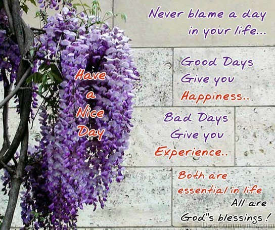 Never Blame A Day