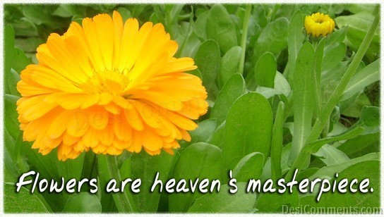 Flowers Are Heaven