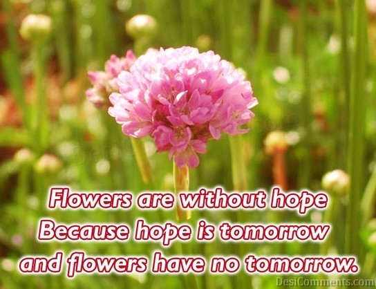 Flowers Are Without Hope