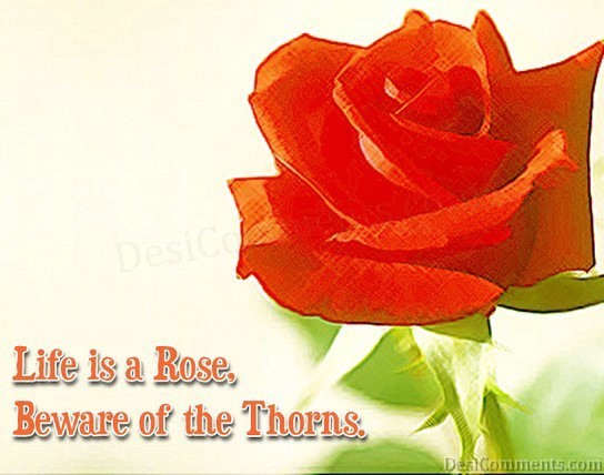 Life Is A Rose