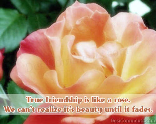 Friendship Is Like A Rose