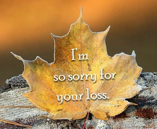So Sorry For Loss
