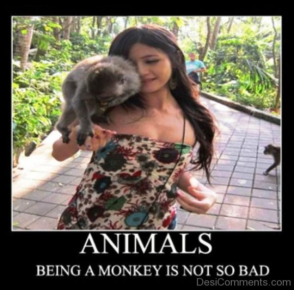 Being A Monkey Is Not So Bad