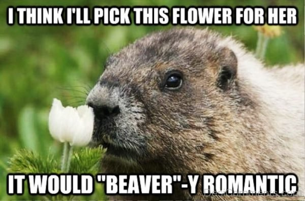 I'll Pick This Flower For Her