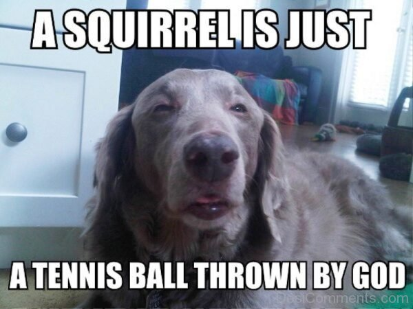A Squirrel Is Just