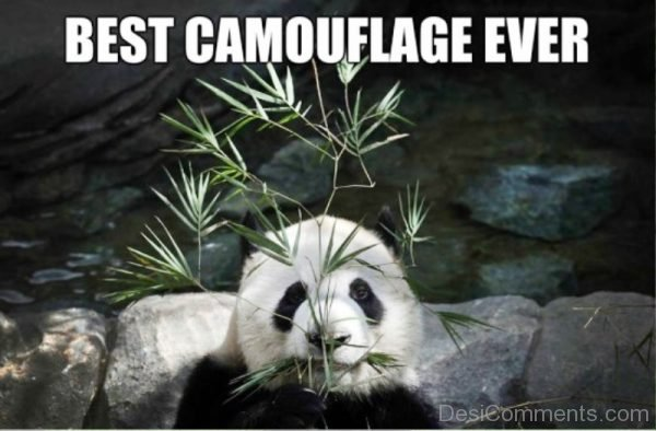 Best Camouflage Ever