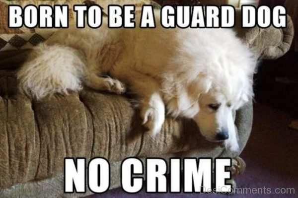 Born To Be A Guard Dog
