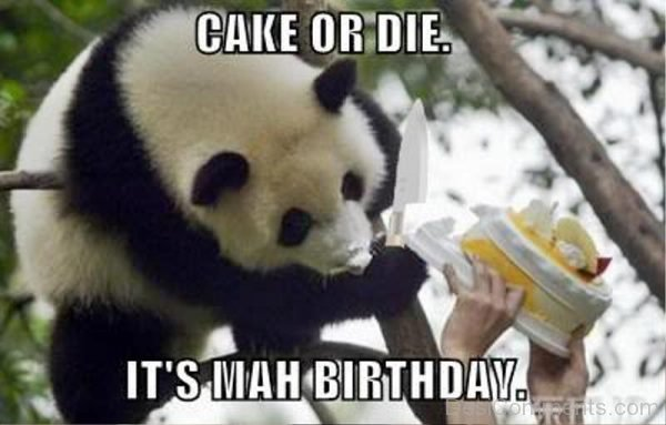 Cake Or Die Its Mah Birthday