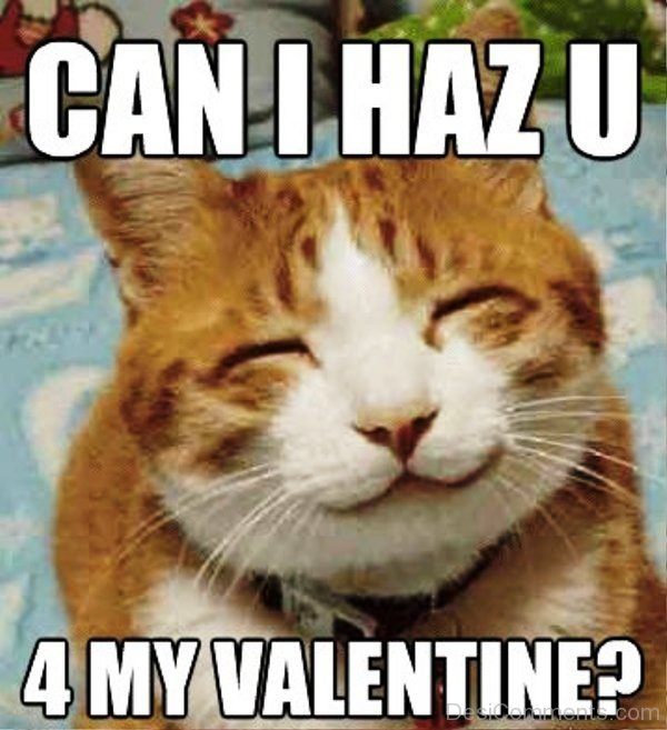 Can I Has You 4 My Valentine