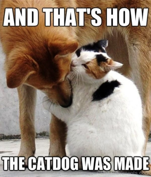 Catdog Was Made