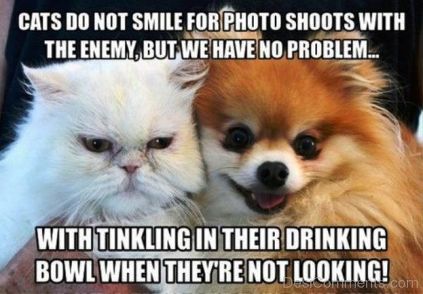 Cats Do Not Smile For Photo Shoots