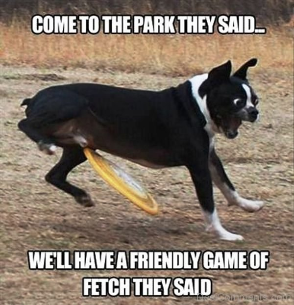 Come To The Park They Said