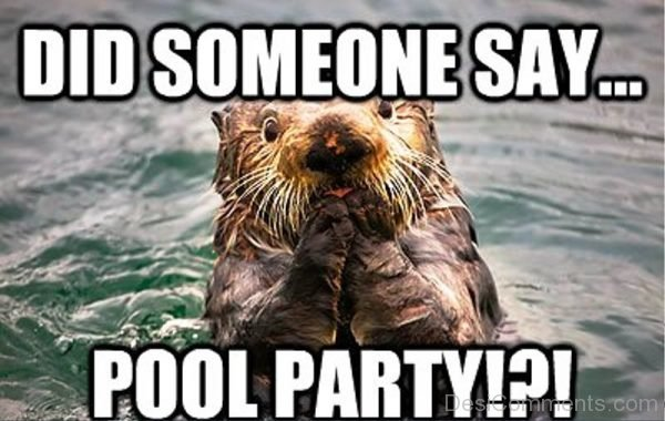 Did Someone Say Pool Party