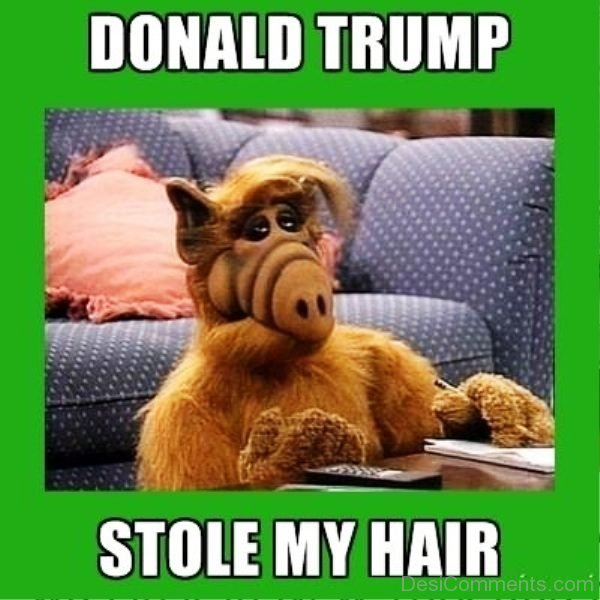 Donald Trump Stole My Hair