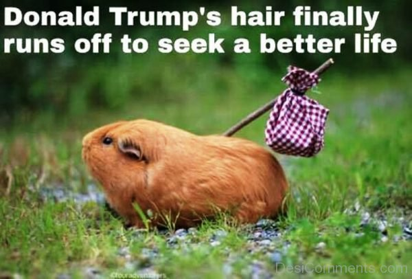 Donald Trumps Hair Finally