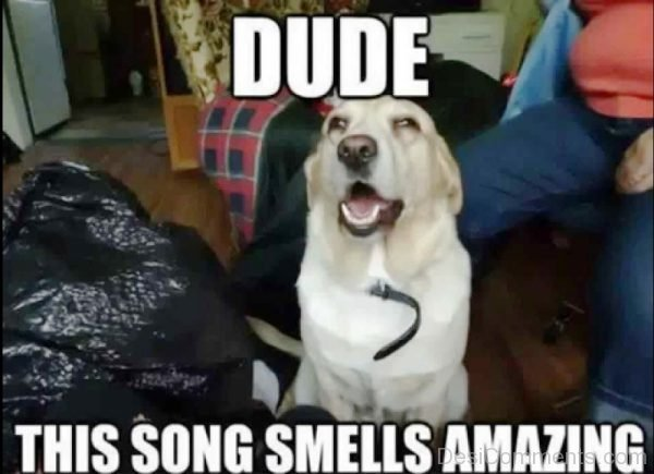 Dude This Song Smells Amazing