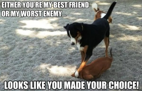 Either You re My Best Friend