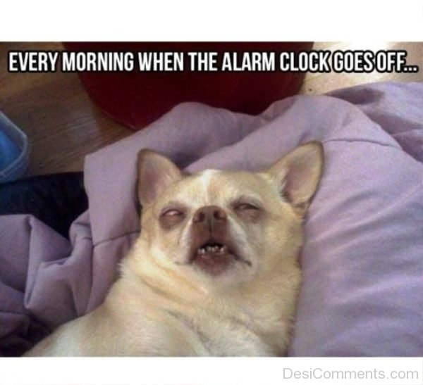 Every Morning When The Alarm Clock Goes Off