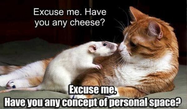 Excuse Me Have You Any Cheese