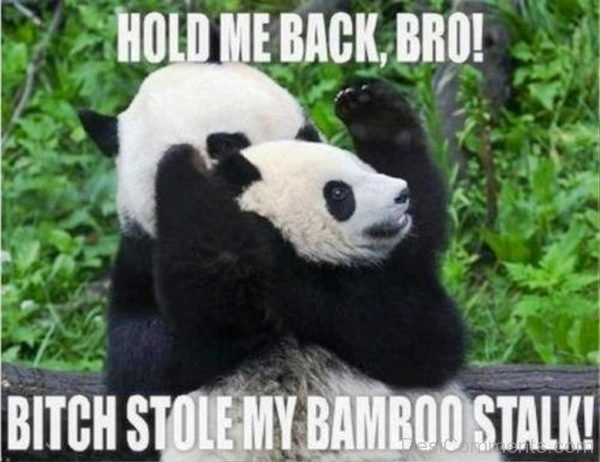 Hold Me Back Bro