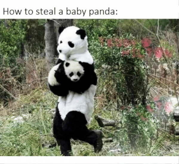 How To Steal A Baby Panda