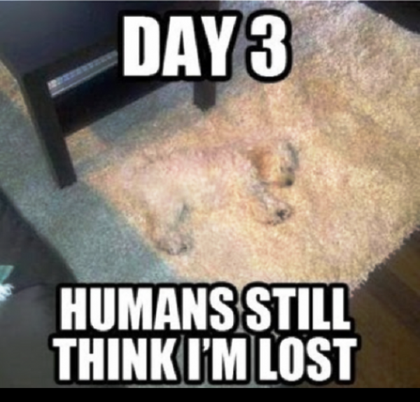 Humans Still Think Im Lost