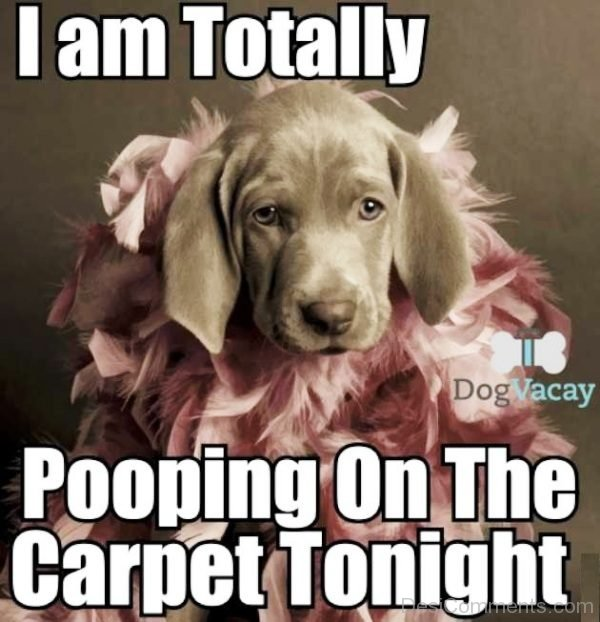I Am Totally Pooping