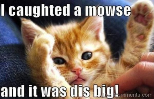 I Caughted A Mowse