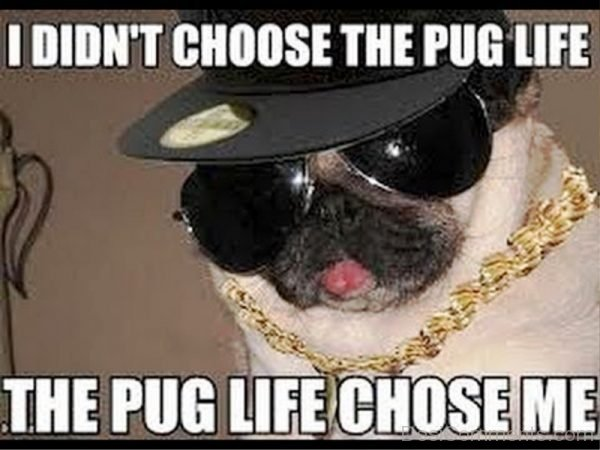 I Didnt Choose The Pug Life