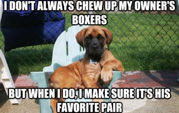 I Dont Always Chew Up