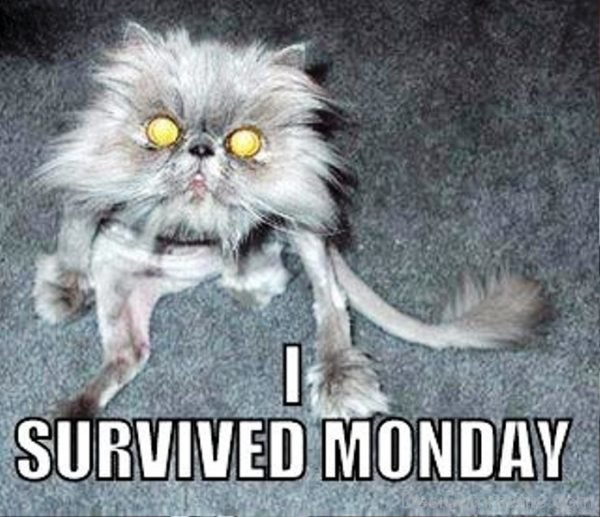 I Survived Monday