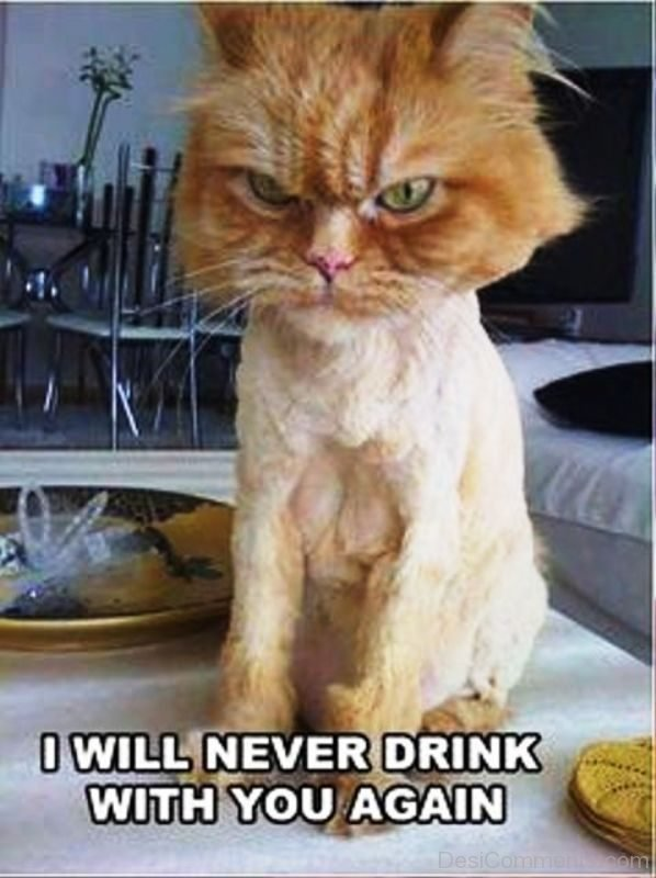 I Will Never Drink