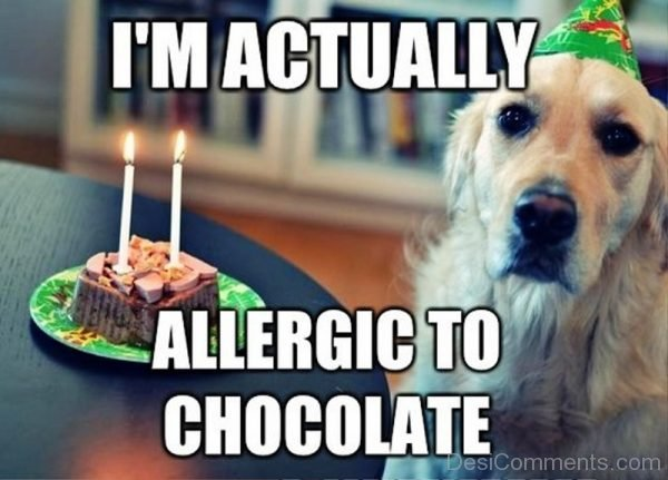 Im Actually Allergic To Chocolate
