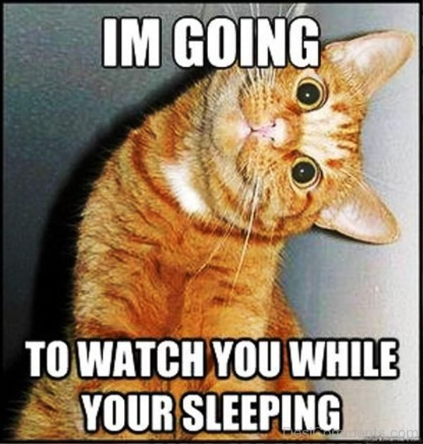 Im Going To Watch You
