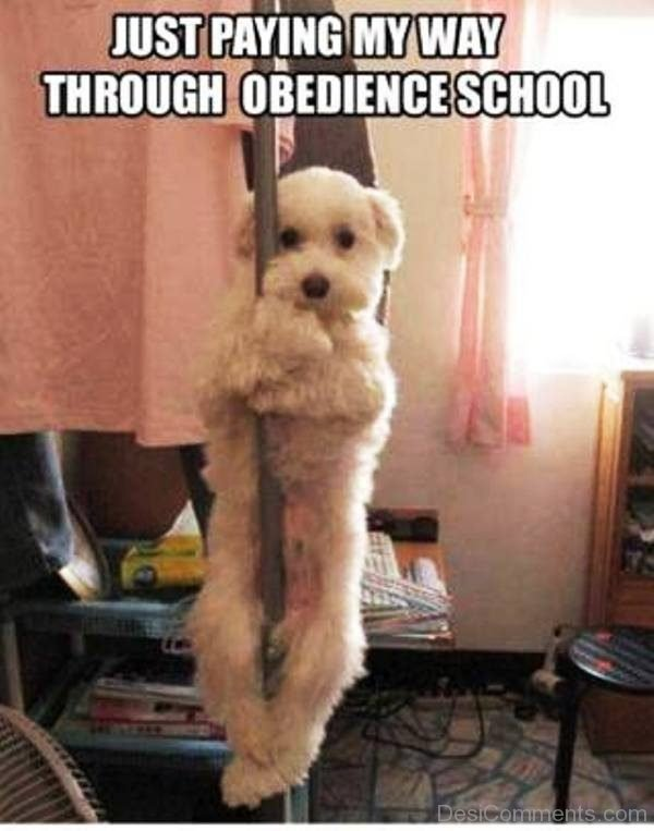 Just Paying My Way Through Obedience School