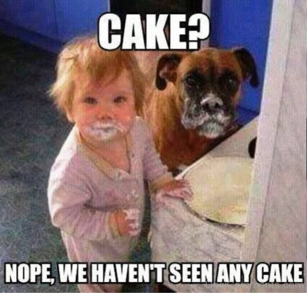 Nope We Havent Seen Any Cake