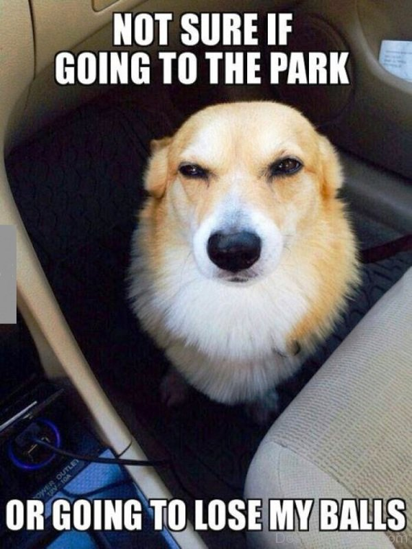 Not Sure If Going To The Park