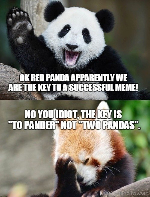 88 funniest panda memes desicomments ok red panda apparently we are the key voltagebd Choice Image