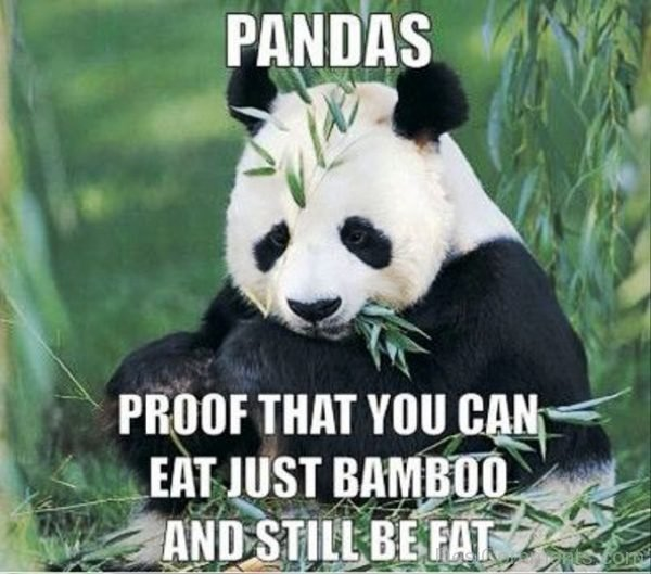 Pandas Proof That You Can Eat Just Bamboo