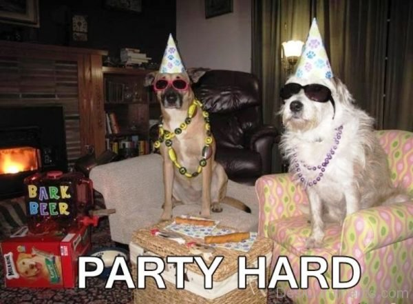 Party Hard Dogs