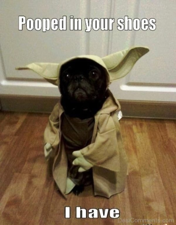 Pooped In Your Shoes