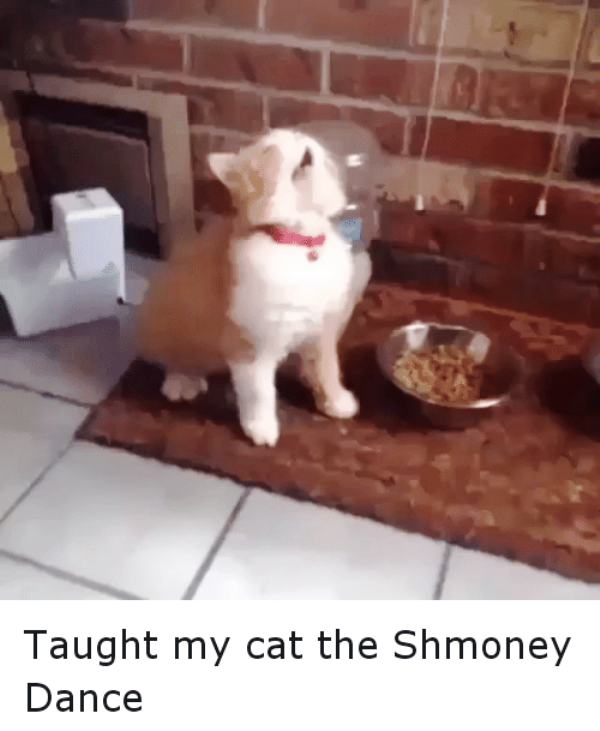 Taught My Cat The Shmoney Dance