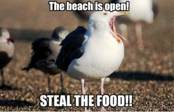 The Beach Is Open