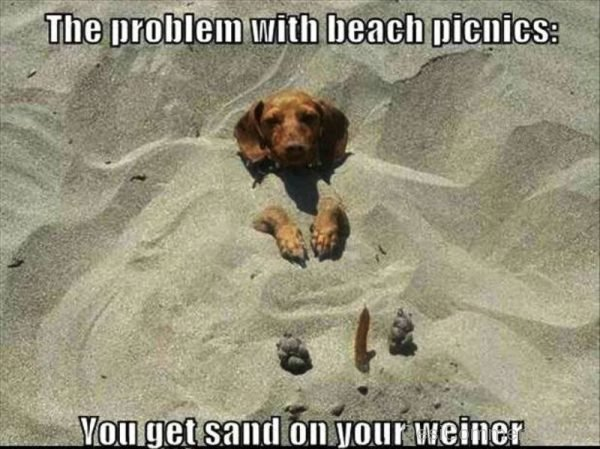 The Problem With Beach Picnics