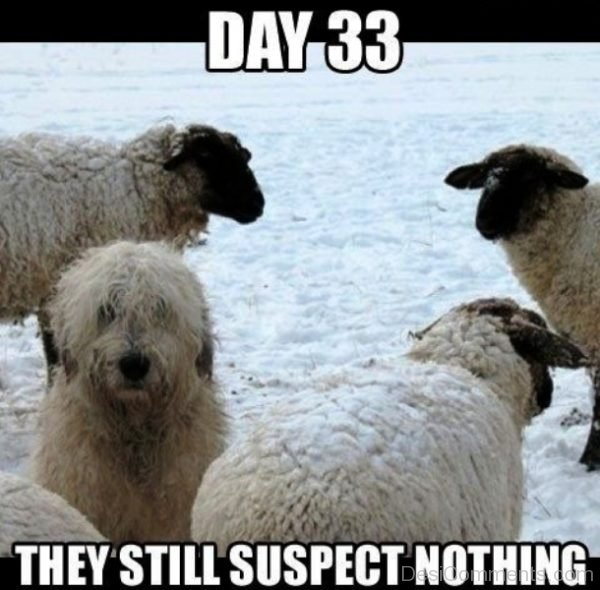 They Still Suspect Nothing