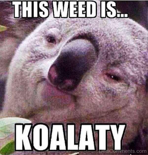 This Weed Is Koalaty