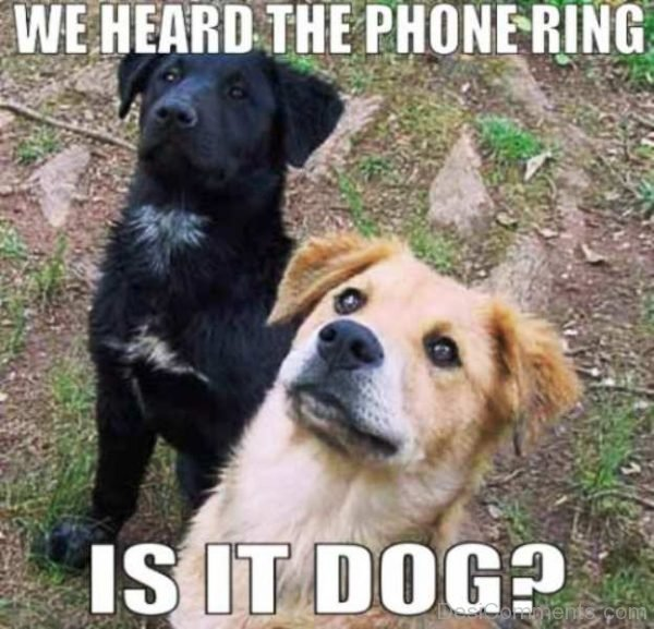 We Heard The Phone Ring