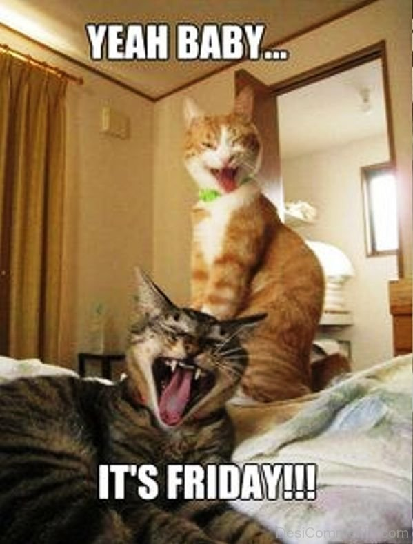Yeah Baby Its Friday