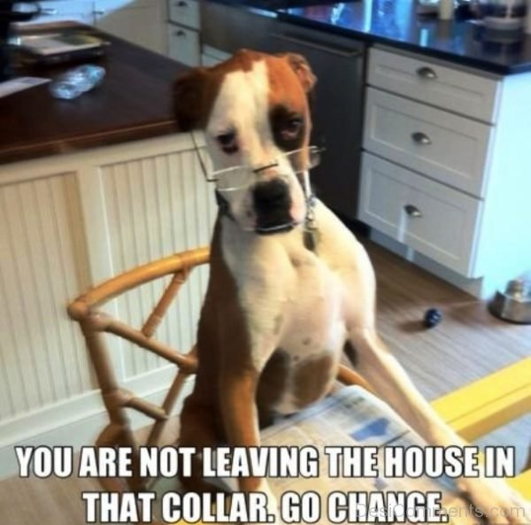 You Are Not Leaving The House