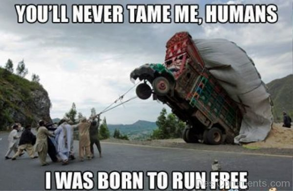 You ll Never Tame Me Humans